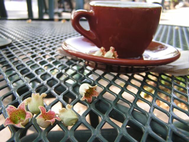 Кофе (kava)