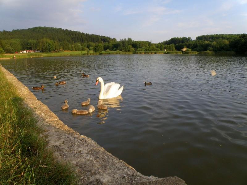 Олешский пруд (Olešský rybník)