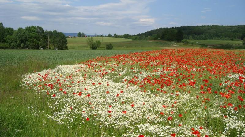 Национальный заповедник Чешский рай