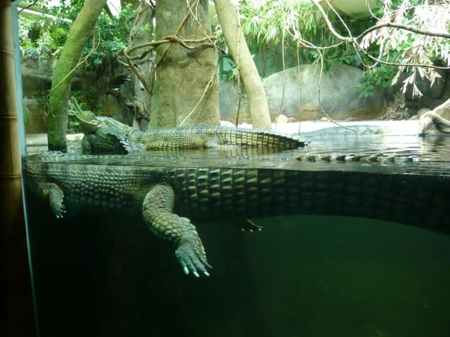 Крокодилы в Пражском зоопарке.