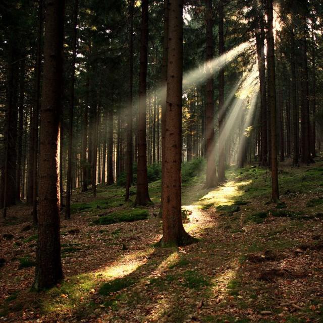 Национальный парк Шумава (Národní park Šumava) Чехия