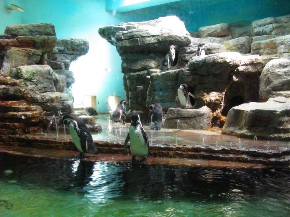 В гостях у пингвинов