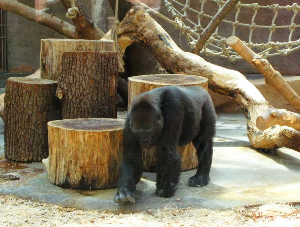 Павильон горилл