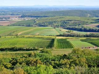 """Традиции виноделия в Чехии. Праздники вина. """"Винные"""" туристические маршруты."""