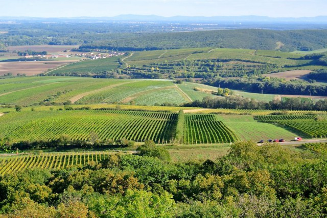 Виноградники Моравии