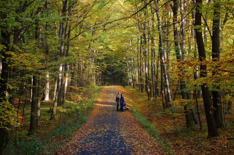 Осень в Злине