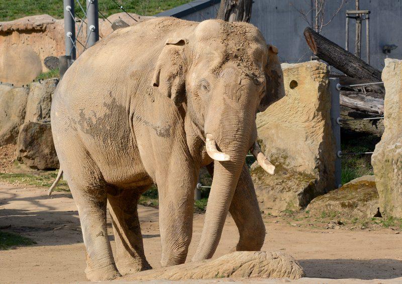 В новом слоновнике