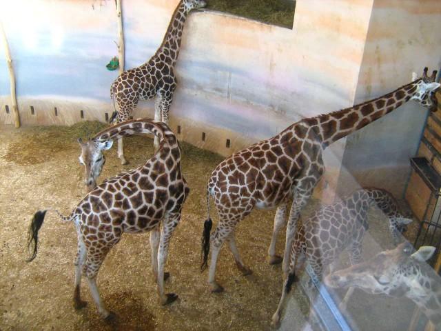 Зима в пражском зоопарке