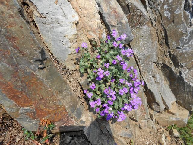 Цветы выглядят естественно, и это заслуга садовников