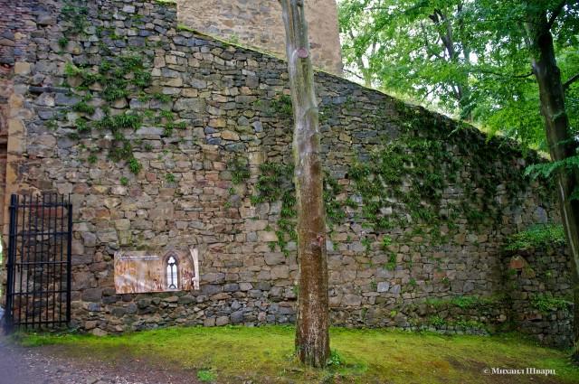 Сквозь вековые стены замка Звиков пробивается травка