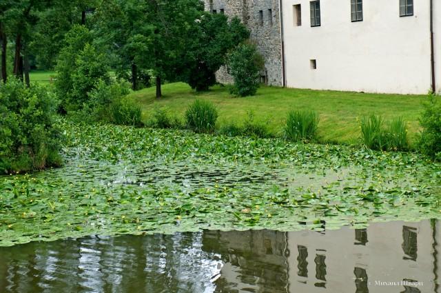В озере плавают утки с утятами и цветут кувшинки. Красотища!