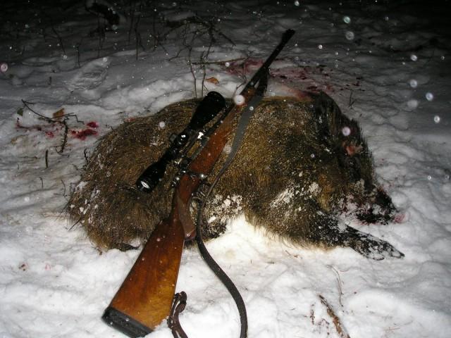 Охота на кабана в Чехии