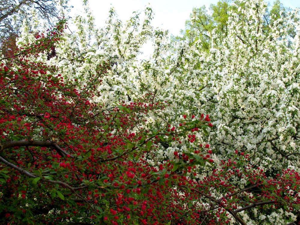 Вояновы сады весной