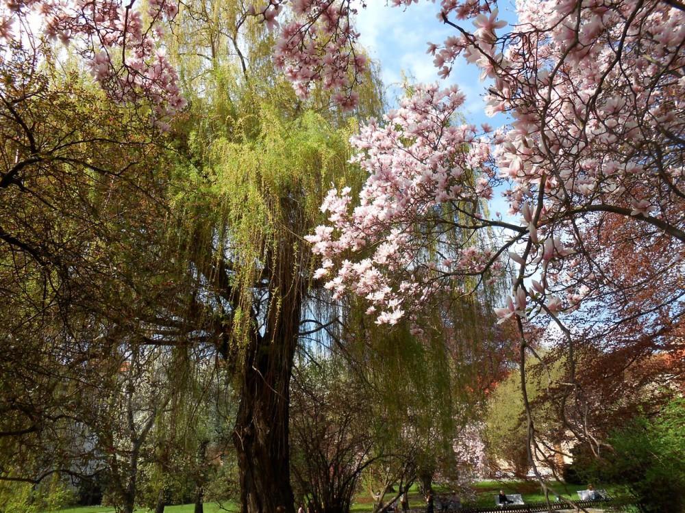 Пробуждение природы в апреле