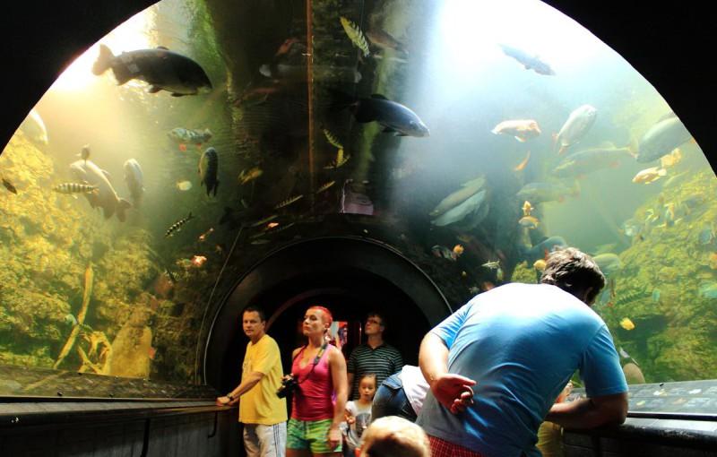 Гиганский аквариум