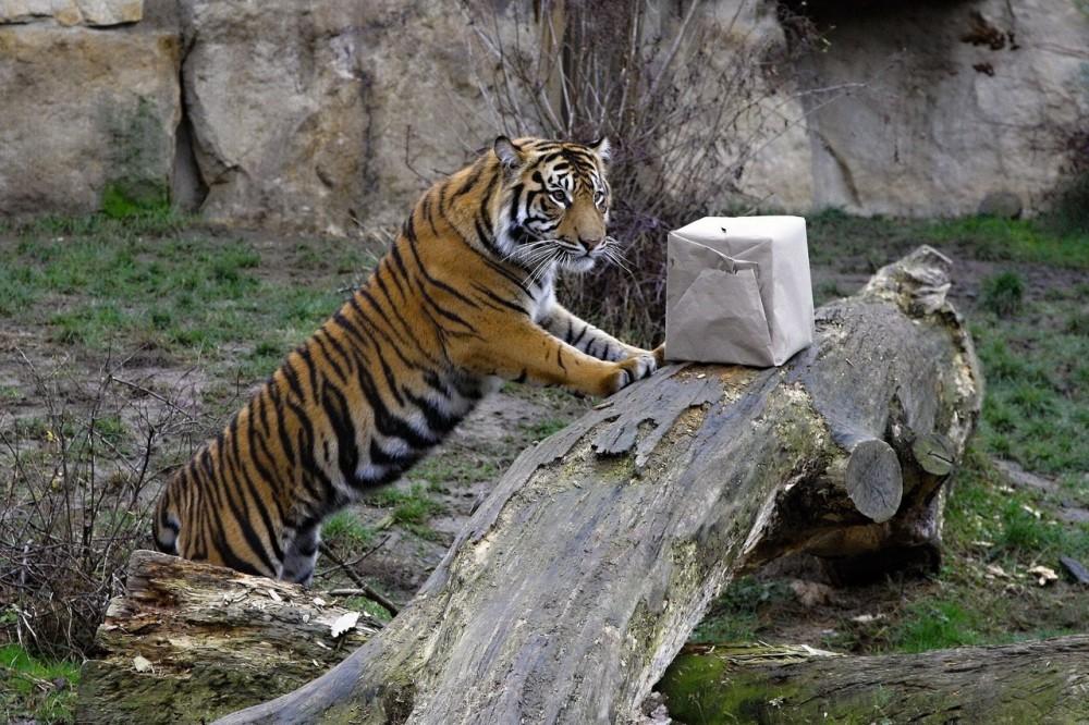У зверей в пражском зоопарке то же праздник