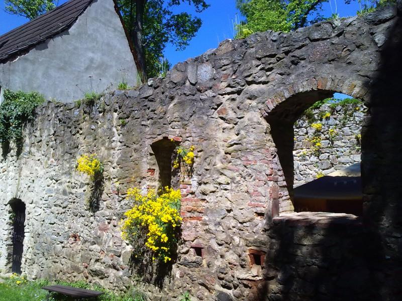 Сквозь вековые стены замка Звиков пробиваются цветы